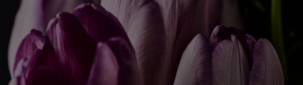 greetings background flower image